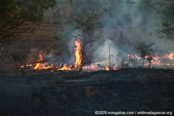 Grassfire in Madagascar