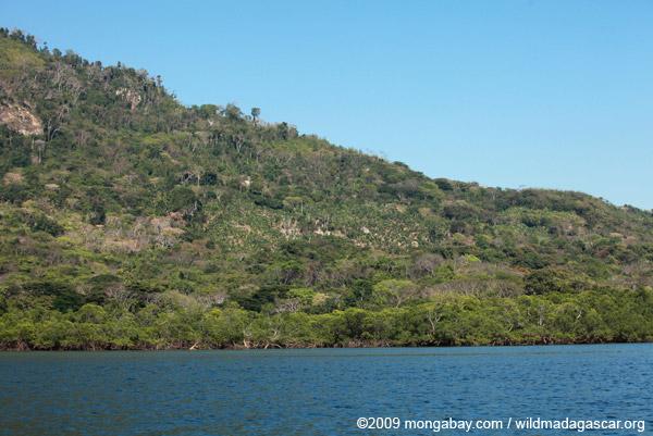 Plantation on the north coast of Madagascar near Ankify
