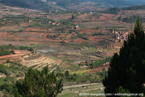 Terraced rice paddies in Madagascar's Central Highlands