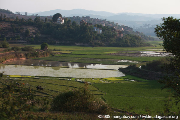 Village and rice paddies in Madagascar's Central Plateau