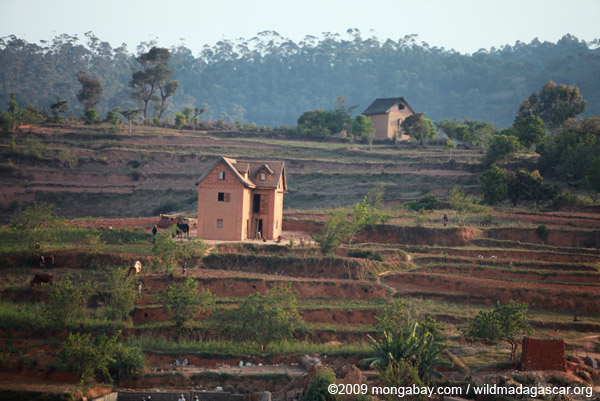 Home amid terraced rice fields in Madagascar's Central Plateau