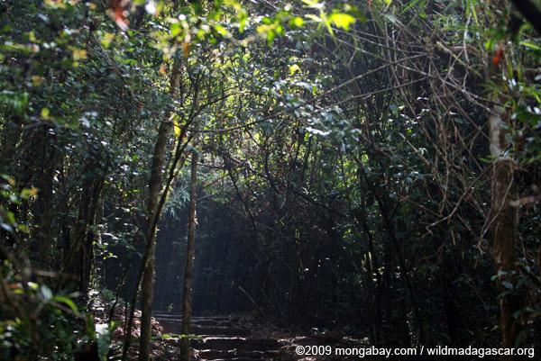 Rainforest path in Ranomafana