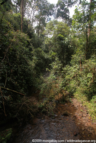 Rainforest creek in Ranomafana