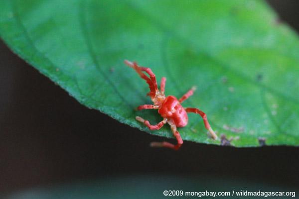 Pink and orange spider