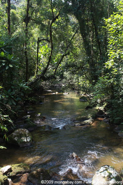 Ranomafana rainforest creek