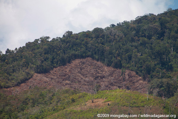 Deforestation near Ranomafana
