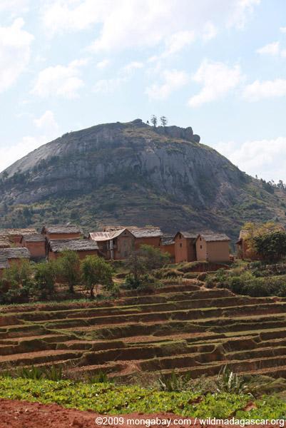 Terraced rice fields near Fianarantsoa