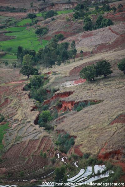 Lavaka and rice fields near Fianarantsoa