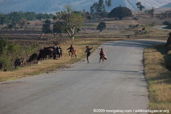 Zebu-herding boys doing kung fu moves on RN7 near Anja