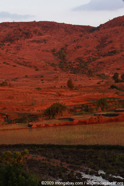 Red earth and rice paddies at sunset