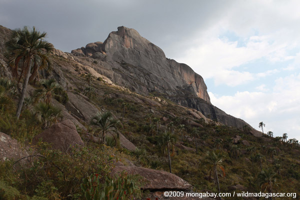 Andringitra landscape: boulders and palms