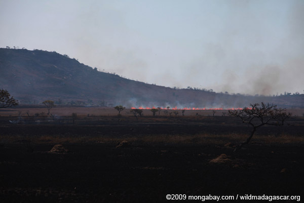 Fire creeping across the savanna in Madagascar