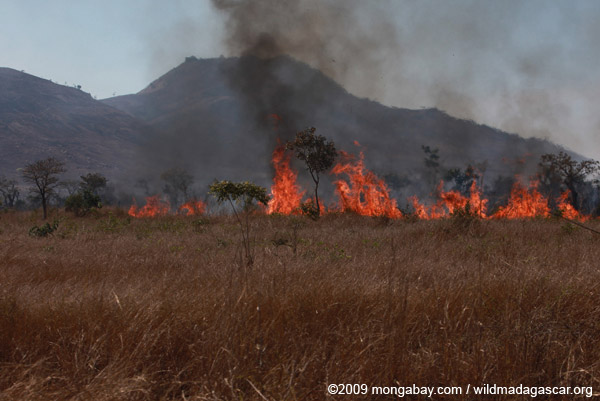 Fire in Madagascar