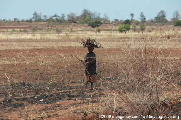 Woman gathering sticks as firewood