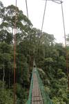 Danum Valley canopy walkway -- sabah_2618
