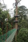 Danum Valley canopy walkway -- sabah_2624