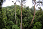 Danum Valley canopy walkway