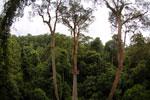Danum Valley canopy walkway -- sabah_2638