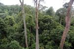 Danum Valley canopy walkway -- sabah_2640