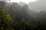 Danum Valley rainforest -- sabah_2656