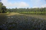 Borneo oxbow lake -- sabah_3220