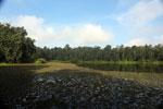 Borneo oxbow lake