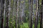 'Zero Deforestation' not necessarily the answer, environmentalists warn