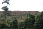 Deforestation for oil palm -- sabah_3277