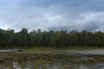 Oxbow lake in Borneo -- sabah_3343