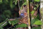 Bird -- sabah_3739