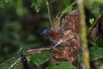Bird -- sabah_3746