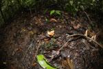 Fungi -- sabah_3809