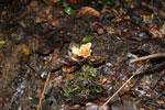 Fungi -- sabah_3810