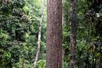 Borneo rainforest -- sabah_4042