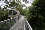 Canopy walkway at the Rainforest Discovery Center -- sabah_4113