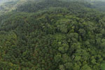 Oil palm plantation and rainforest in Borneo -- sabah_aerial_0009