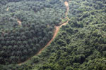 Oil palm plantation in Borneo