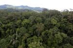 Rainforest in Borneo -- sabah_aerial_0197