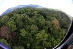 Rainforest in Borneo -- sabah_aerial_0205