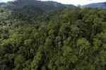Rainforest in Borneo -- sabah_aerial_0272