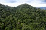 Rainforest in Borneo -- sabah_aerial_0306