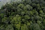 Rainforest in Borneo -- sabah_aerial_0340
