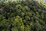 Rainforest in Borneo -- sabah_aerial_0342