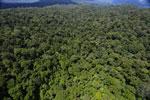 Rainforest in Borneo -- sabah_aerial_0413