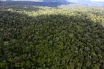 Rainforest in Borneo -- sabah_aerial_0429
