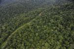 Logging road in Borneo