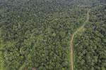 Logging road in Borneo -- sabah_aerial_0531