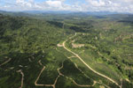 Oil palm plantations in Borneo -- sabah_aerial_0586