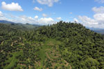 Conversion of rainforest for palm oil production in Borneo -- sabah_aerial_0590