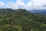 Conversion of rainforest for palm oil production in Borneo -- sabah_aerial_0592
